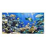 Bilderwelten Paraschizzi in vetro - Underwater Reef - Orizzontale 1:2, Paraschizzi cucina pannello paraschizzi cucina paraspruzzi per piano cottura pannello per parete cucina, Misura (AxL): 40cm x 80cm