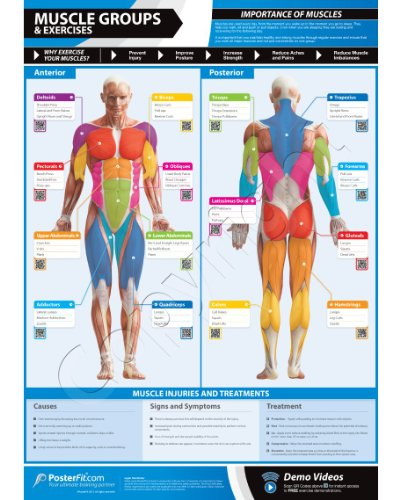 Muscle Groups &Amp; – Fitness Planners