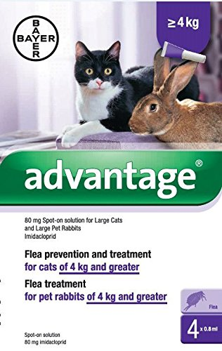 advantage-80-for-large-4-8kg-cats-and-rabbits-4-pipettes