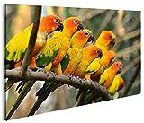 islandburner Bild Bilder auf Leinwand Papageien V2 Vögel Papagei 1K XXL Poster Leinwandbild Wandbild Dekoartikel Wohnzimmer Marke