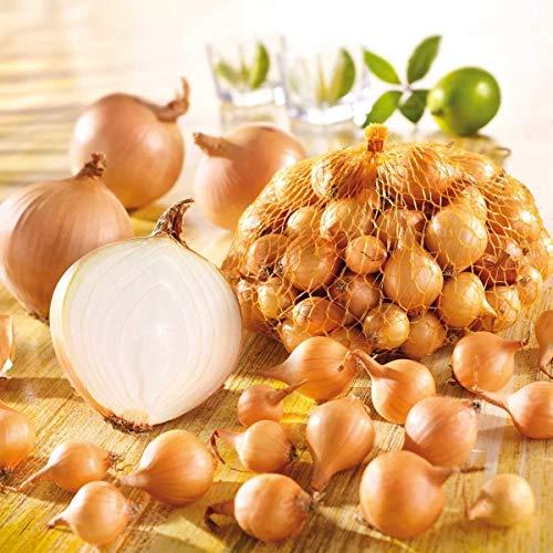 AIMADO Samen-100 Pcs Zwiebel Bio Samen scharfes Fleisch Sehr ertragreich Saatgut Gut geeignet zum Lagern