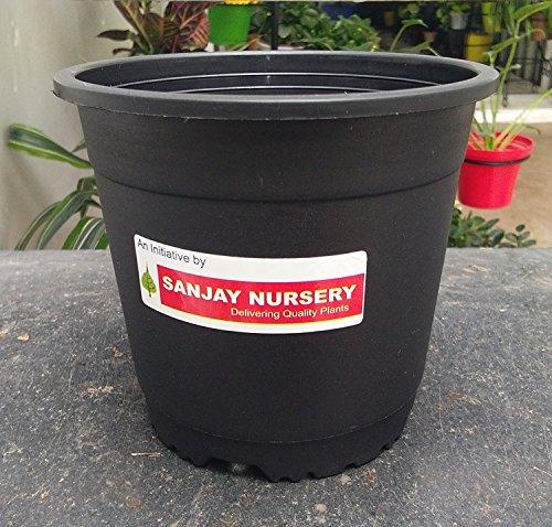 Chhajed Garden's Sunrise 14.5 cm Gardening Plant Container (Black Nursery Plastic Pot...