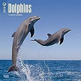 Dolphins - Delfine 2018-18-Monatskalender: Original BrownTrout-Kalender [Mehrsprachig] [Kalender] (Wall-Kalender)