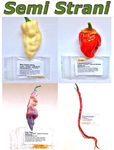 40 GRAINES de les 6 PIMENT CHILI LES PLUS BEAU et SAVOUREUX DU MONDE - LA COLLECTION BEAUTIFUL: PINK TIGER, THUNDER MOUNTAINS LONGHORN CHILI PEPPER, BHUT JOLOKIA GHOST CHILI WHITE, 7 POD BUBBLEGUM - LES FRUITS NE SONT PAS INCLUSES