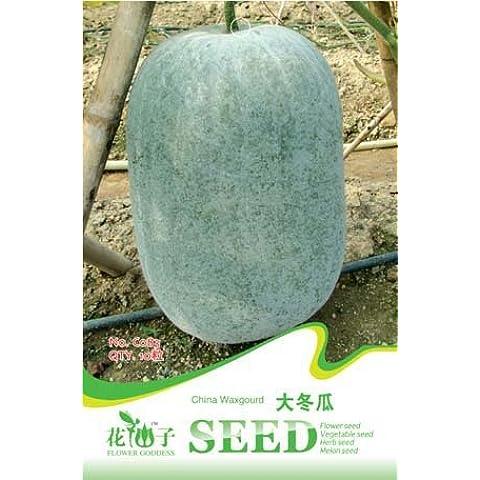Spedizione gratuita 3 confezioni da 30 semi Big cera zucca Semi / Benincasa hispida inverno melone C083 - Inverno Fioritura Alberi