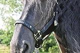 horseandangels Pferdehalfter schwarz - Halfter für Pferde - Vollblut und Warmblut - Full - Edeles stabiles Nylonhalfter mit Wildleder Innen an Kopf und Nase von h & a - Premium Quality