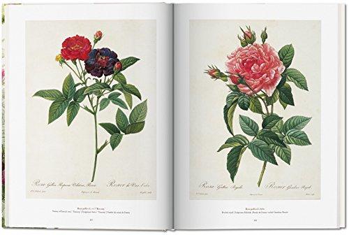 Zoom IMG-2 il libro dei fiori lingua