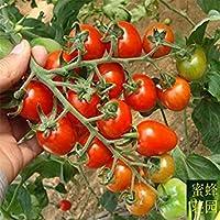 Vistaric Top Fashion Direct Selling Summer Landscape Plant Excluido Semillas Regulares Pequeños Caqui Tomates.