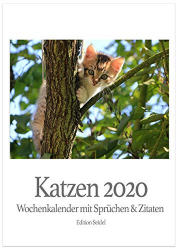 Edition Seidel Premium Katzen Wochenkalender 2020 Wandkalender Literarischer Kalender Literaturkalender Katzenkalender mit Sprüchen und Zitaten (Wandkalender DIN A5)