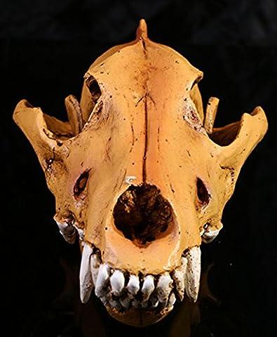 Gazechimp Wolf Schädel Kopf Modell Figur für Lehre Sammlung Haus Bar Dekor