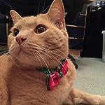 KOTiger Pet Dog Tie Christmas Adjustable Bow Collar Santa Xmas Gift Decor Christmas Pet Supplies 51GM3NkamzL