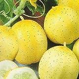 Pepino - Limón - 20 semillas [fácil de cultivar]