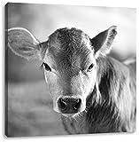 Junge Kuh Kälbchen Kunst B&W, Format: 40x40 auf Leinwand, XXL riesige Bilder fertig gerahmt mit Keilrahmen, Kunstdruck auf Wandbild mit Rahmen, günstiger als Gemälde oder Ölbild, kein Poster oder Plakat