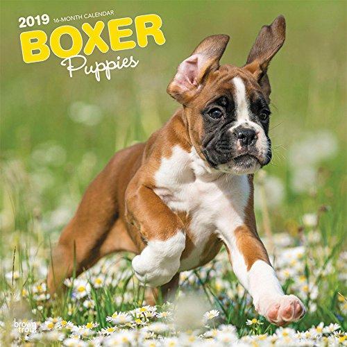 Boxer Puppies - Boxer Welpen 2019 - 18-Monatskalender mit freier DogDays-App: Original BrownTrout-Kalender [Mehrsprachig] [Kalender] por Inc. Browntrout Publishers