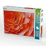 Red Rose 1000 Teile Puzzle quer (CALVENDO Natur)