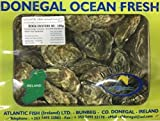 Irische Donegal Felsen Austern 12 Stück