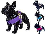 Lushpetz Blumen-Hundegeschirr im rosa schwarzen Blauen oder purpurroten Entwurf für Kleine mittlere Hunderassen XSmall (4 Passt auf die Brust 60cm /23.5
