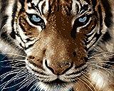 YEESAM ART Neuerscheinungen Malen nach Zahlen für Erwachsene Kinder - Majestic Tiger Sharp Eye 16 * 20 Zoll Leinen Segeltuch - DIY ölgemälde ölfarben Weihnachten Geschenke