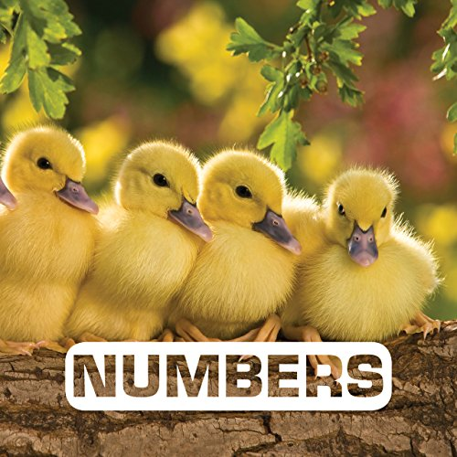 Numbers (Picture This) (English Edition) de [Nouvion, Judith]
