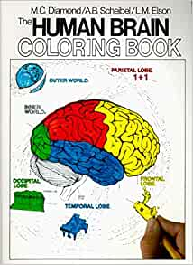 The Human Brain Coloring Book (Coloring Concepts Series): Amazon ...