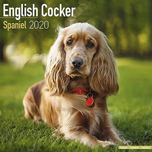 English Cocker Spaniel Calendar 2020 -