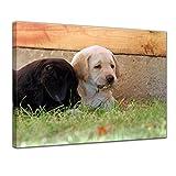 Kunstdruck - Labradorwelpen - 60x50 cm - Bilder als Leinwanddruck - Wandbild von Bilderdepot24 - Tierwelten - Hunde - Haustiere - niedliche Welpen im Gras