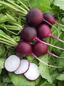 JustSeed - Gemüse - Radieschen - Malaga Violett - 3000 Samen