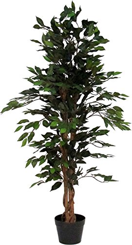 Verdevip Ficus Benjamin Verde - Albero Artificiale Da Arredo Interno Con Tronco Vero - Alto 150 cm - Largo 55 cm