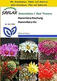 SAFLAX - Anzucht Set - Kakteen - Mammilaria Mischung - 40 Samen - Mammilaria Mix