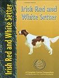Irish Red and White Setter