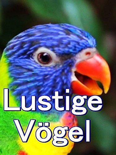 Clip: Lustige Vögel