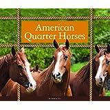 American Quarter Horses (Majestic Horses)