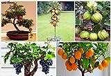 #2: Azalea Gardens Bonsai Suitable Fruit Seeds Combo - Pomegranate Grapes Guava Apple Orange 5 Seeds Each