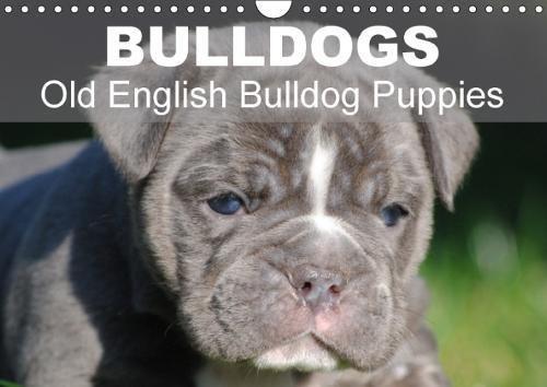 Bulldogs - Old English Bulldog Puppies (Wall Calendar 2018 DIN A4 Landscape): Beautiful bulldog puppies in the sun (Monthly calendar, 14 pages ) ... [Kalender] [Apr 01, 2017] Stanzer, Elisabeth