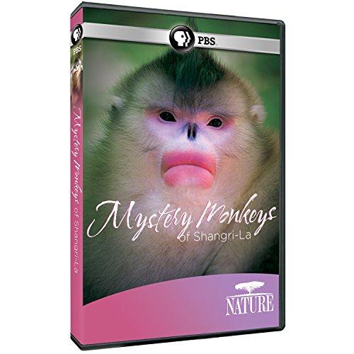 nature-mystery-monkeys-of-shangri-la