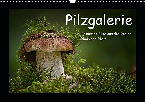 Pilzgalerie - Heimische Pilze aus der Region Rheinland-Pfalz (Wandkalender 2019 DIN A3 quer): 13 beeindruckende Pilzaufnahmen (Monatskalender, 14 Seiten ) (CALVENDO Natur)