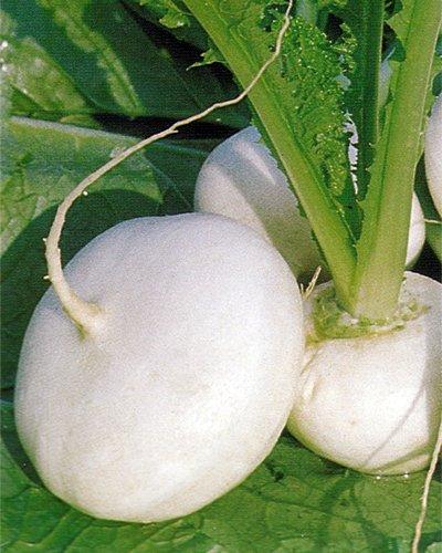 Premier Seeds Direct TUR05 Milan weiße RübenSamen (Packung mit 5000)