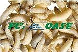 100 Stück Bienenmaden Wachsraupen Wachsmaden Angelköder Köder Futtertiere