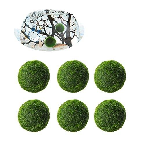 UEETEK Palle di Marimo Moss da Aquatic Arts Aquarium Piante Naturali 0.47inch- Confezione da 6 Pz