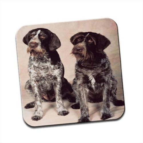 German Wirehaired Pointer Dogs Singolo sottobicchiere