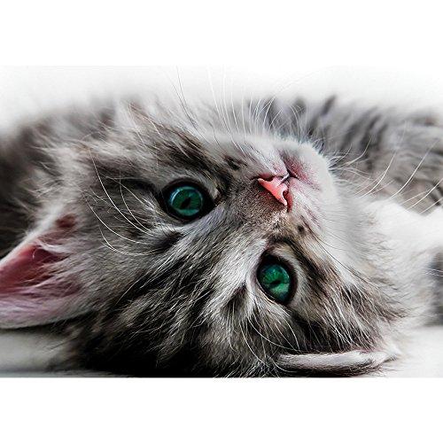 Vlies Fototapete PREMIUM PLUS Wand Foto Tapete Wand Bild Vliestapete - Katze Kätzchen Kitten Tier Fell Augen - no. 2960, Größe:368x254cm Vlies