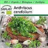 SAFLAX - - BIO - Cerfoglio - 800 semi - Anthriscus cerefolium