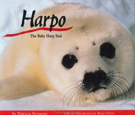 Harpo, the Baby Harp Seal - Baby Harp Seal