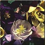 JustSeed Blume Akelei Parf miertes Garten Mix 250 Samen, Groß packung