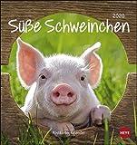 Schweinchen Postkartenkalender Kalender 2020
