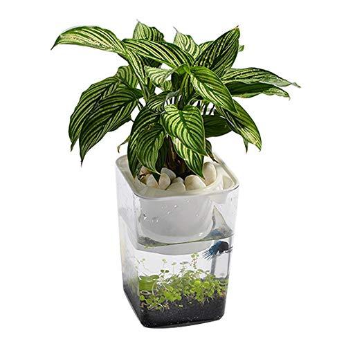 Chengstore Aquaponic Mini-Betta Aquarium, umweltfreundlicher Kunststoff, fördert gesunde Umwelt für Pflanzen und Fische