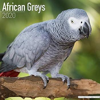 African Greys Calendar 2020
