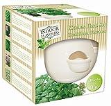 Kitchen Herb Garden Seed Kit Gift Box - 5 Herbs in 1