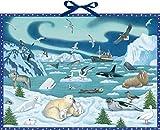 Wand-Adventskalender - Tiere der Arktis: Mit Infotexten zu den Tieren -