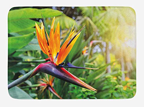Plant Bath Mat, Close-up Image of Strelitzia Reginae Bird of Paradise Flower Madeira Island Portugal, Plush Bathroom Decor Mat with Non Slip Backing, 23.6 W X 15.7 W Inches, Multicolor Island Flower Bowl